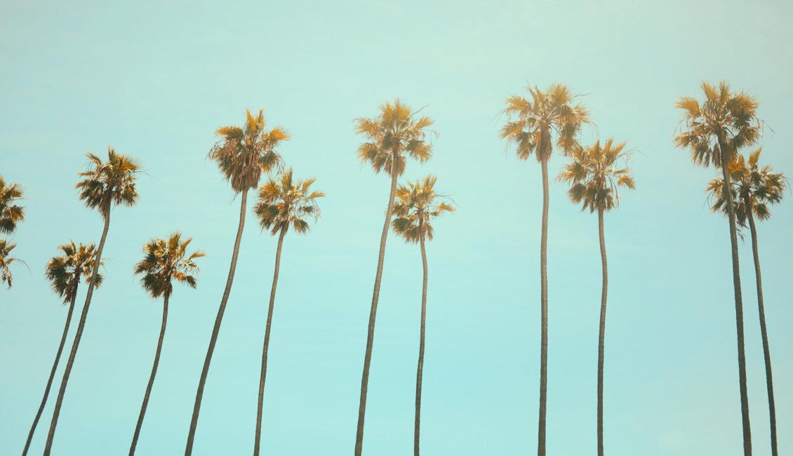 florida or california